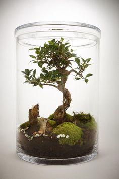 80 Awesome Bonsai Terrarium in the Jars Ideas https://decomg.com/80-awesome-bonsai-terrarium-jars-ideas/