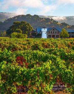 Wine Country Print, Napa Valley Photo, California Wall Art, Sonoma Fine Art, Canvas Gallery Wrap, Winery, Matted Wall Prints, Wall Decor - $15.30 USD