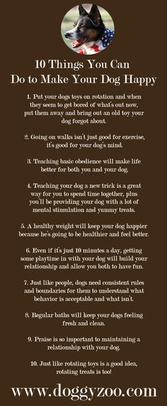 10 Things You Can Do to Make Your Dog Happy
