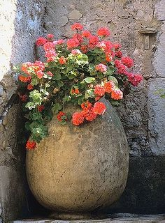DIY plant containers | rustic Mediterranean charm. Include pots of this classic shape on the gravelled areas grouped in odd numbers.