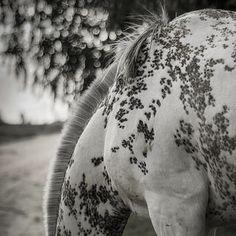Crin | Flickr - Photo Sharing!