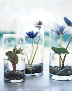 Pond in a Vase Showcase water lilies in your home with these elegant displays, creating an impression of an aquatic garden.Showcase water lilies in your home with these elegant displays, creating an impression of an aquatic garden. Indoor Water Garden, Garden Plants, Indoor Pond, Cactus Plants, Water Plants For Ponds, Gravel Garden, Garden Pond, Fruit Garden, Shade Garden