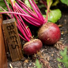 How to Eat the Beet from Root to Leaf — Just Beet It Best Vegetables To Eat, Root Vegetables, Beet Recipes, Cleanse Recipes, Vegetarian Recipes, Beets Nutrition, Pickled Beets Recipe, Protein Metabolism
