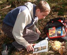 Pilze bestimmen: Wie Du ein guter  und sicherer Pilzsammler wirst