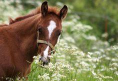 FWB Warmblood Horses, Animals, Animales, Animaux, Animal, Animais
