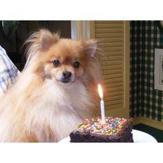 Louie's Birthday!  How cute :)