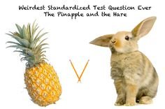 Standardized test makers ask the classic question: who would win in a race between a hare and a ....talking pineapple? Click to read more if you're also stumped!