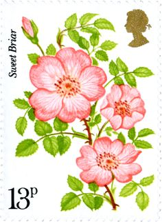 Sweet Briar Rose #SpecialStamp from 1976 'Centenary of Royal National Rose Society'
