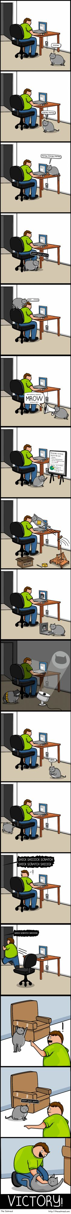 Cat vs internet.  Hilarious and entirely accurate from The Oatmeal