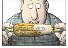 Genetically Modified Organisms... The good, the bad, and the scary. - AgriHunt