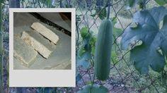 χειροποίητο σαπούνι ελαιολάδου για το σώμα, με γάλα κατσίκας- αιθέριο έλαιο λεβάντας και λούφα δικής μου παραγωγής