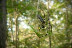 Giant wood spider in Pench National Park  | FATHOM Travel Blog and Travel Guides