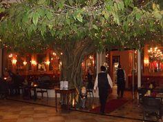 Romantic Restaurant -Winter Park, Fl