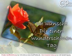 https://www.coolphotos.de/bilder2/07/0611_06324_wunderschoenen_tag.jpg