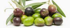FOGLIE: Acquisti in crescita per gli oli di oliva confezio...