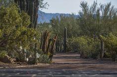 House of Desert Gardens | Paradise Valley, USA | Colwell Shelor Landscape Architecture #desert #landscape #garden