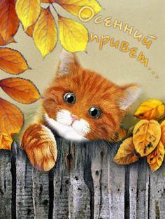 Foto animada Pretty Cats, Beautiful Cats, Anime Animals, Animals And Pets, Autumn Scenes, Halloween Pictures, Autumn Garden, Hello Autumn, Cat Gif