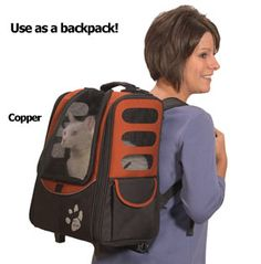 Your cat doesn't want to walk on a leash? No problem, Take her hiking in your backpack...:)