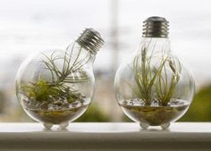 Plants in lights ! Look !