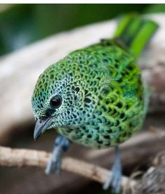 no, i don't know the name of this super cool green little bird...
