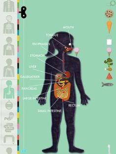 Absolutely fantastic app to teach kids about the human body. (And helpful if you're brushing up yourself!)