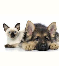 Stati Uniti: 600 vittime fra cani e gatti dopo aver mangiato cibo essiccato Made in Cina