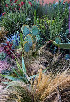 À Afra dans le Haut Atlas, sur quatre terrasses arides, les paysagistes ont créé leur jardin d'essai pour acclimater les plantes rapportées de leurs nombreux voyages, de Madagascar au Mexique. Quelque 300 espèces y poussent avec exubérance / © Marie Taillefer