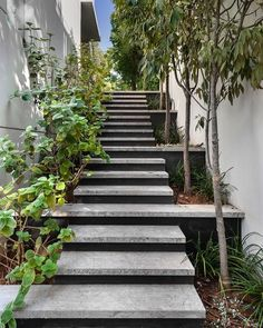 "Eran Binderman ערן בינדרמן on Instagram: ""Landscaped stairs. Private residence. The stairs create the vegetation containers on both sides. 2 types of stone were used to accentuate…"" Garden Stairs, Types Of Stones, Outdoor Living, The Neighbourhood, Interior Design, Architecture, Mars, House, Create"