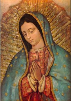 Novena to Our Lady of Guadalupe: December 3 to December 11 . Our Lady of Guadalupe, Mystical Rose, intercede for the Holy Church, prote. Blessed Mother Mary, Blessed Virgin Mary, Religious Icons, Religious Art, Religious Gifts, Saint Jean Paul Ii, Saint Vincent, Mary Of Guadalupe, Madonna