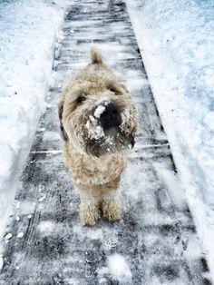 Wonka enjoying the snow ☺️