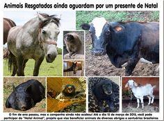 Mural Animal: Animais Resgatados ainda aguardam por um presente ...