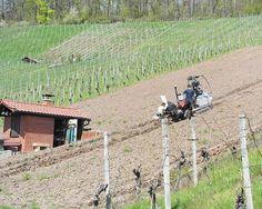 """Wir haben FÜNF neue Weinberge angelegt! Jetzt heißt es über die Sommermonate erst mal """"Jungfeld-pflege""""... Einen Jungfernwein werden wir voraussichtlich 2019 ernten und ab 2020 gibts dann die ersten Kostproben des Weins. :)"""