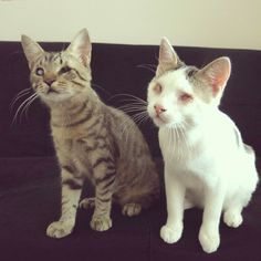 Good news for our two blind/visually-handicapped foster cats Kücüman & Tomi: they found an adoptive family, where they can stay together and forever! I'm more than happy for them, even if I'm going to miss them! #cat #cats #katze #kedi #kediler #kitten #kitty #catlove #catlovers #catsofig #instacat #rescue #adopt #family #pet #cute #happy #love #sokkakkedisi #streetcat #streetcats #streetcatsistanbul #istanbul #catsofistanbul #brothers #happy #newlife #missyou #streetcats