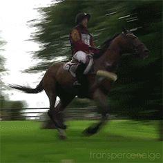 Horses & Books