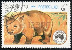 Laos Stamp 1984 - Raccoon