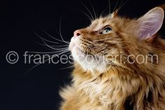 #pets #cat Francesco Vieri ph.