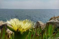 Flor en el mediterráneo. Cap Salou