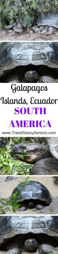 The first Island on our itinerary was Santa Cruz Island. We arrived on the island by tender craft launched from the expedition cruise ship MV Galapagos Explorer ll. We didn't realize it at the time but we were about to be treated to something very special.