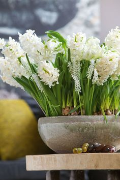 Have a look at these lovely spring decorating ideas and colorful floral combinations. The spring flowering bulbs shine as a centerpiece on the table or