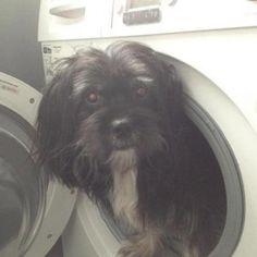 A3veen.nl :: weBLOG :: Zie de wereld door de ogen van A3... 2012-09-22, Woops de hond.  Woops: A3 heeft een voormalige hobby nieuw leven ingeblazen, stappen met een hond.