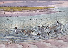 Pintails painting by Artist Richard Allen