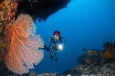#Maumere Worldwide known in 80s. Damaged by tsunami. Now Maumere is BACK!  Healthy underwater habitat beautiful scenery.  Absolutely a place to visit before you .....whatever   Video on @wettraveler YOUTUBE Channel or you can start from the link on my profile