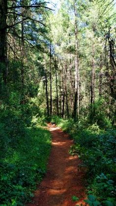 American Canyon Trail: Change of season is a new incarnation filled with new sights to see | Auburn Journal