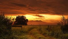 Mount Bartle Frere on the Atherton Tablelands - Queensland, AU