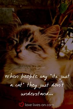 60 Best Loss of a Pet Quotes images in 2019 | Animal Quotes, Animal