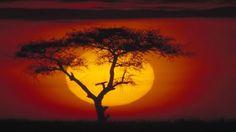 african savanna - Google Search