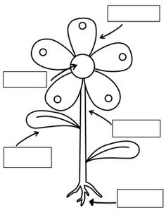 plant labeling tree map with examples of each Kindergarten Science, Teaching Science, Science For Kids, Science Activities, Science Projects, Science And Nature, Classroom Activities, Parts Of A Flower, Parts Of A Plant