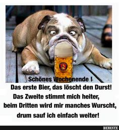 Lustige Bilder Wochenende Kostenlos Funny Pictures Weekend Free Weekend The post Funny Pictures Weekend Free appeared first on Puorton. Cool Pictures, Funny Pictures, Birthday For Him, Facebook Humor, Good Jokes, Picture Video, Cute Dogs, Shit Happens, Sayings
