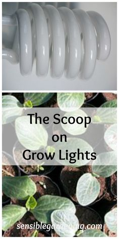 The Scoop on Grow Lights with Sensible Gardening. Types of grow lights for indoor gardening. Indoor Vegetable Gardening, Organic Gardening, Gardening Tips, Gardening Services, Kitchen Gardening, Urban Gardening, Flower Gardening, Gardening Supplies, Container Gardening