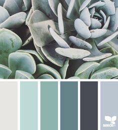 Succulent Tones | De